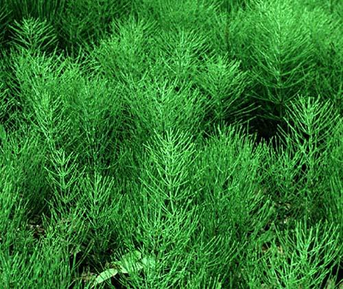 лечебные травы от паразитов человека